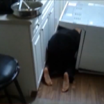 VIDEO: When PLANKING Goes Wrong + Is ?Owling? The New ?Planking??
